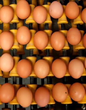 Фипронил в храните: Опасен ли е?
