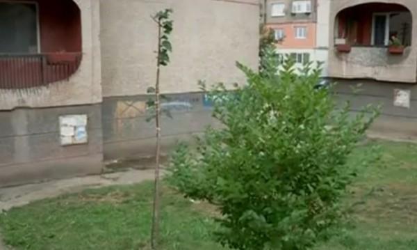 Новороденото, намерено в Перник, хвърлено от седмия етаж