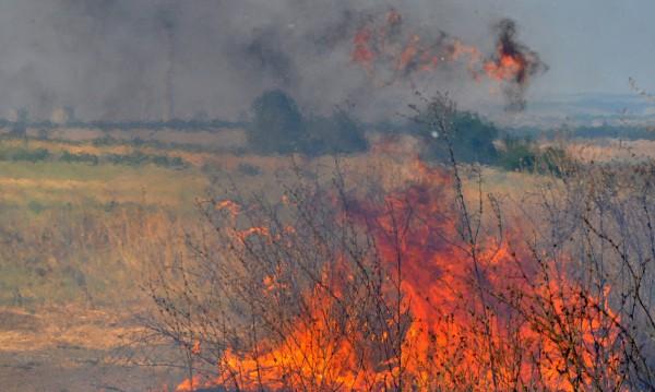 Пожар изпепели 10 дкаа орехова гора в Монтанско