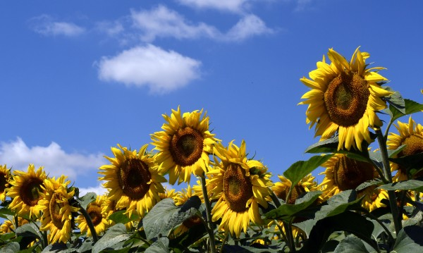 Уикендът започва с много слънце, температурите – до 37°