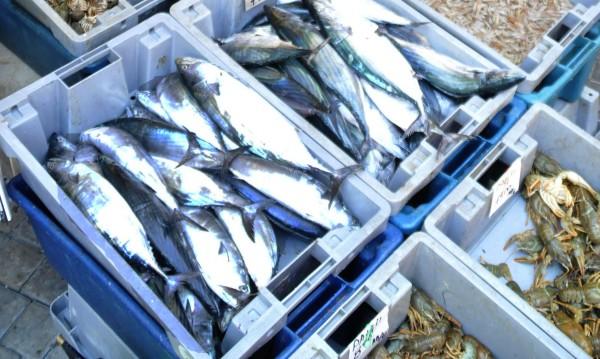 Военните учения изплашиха цацата, прясна черноморска риба не се намира...