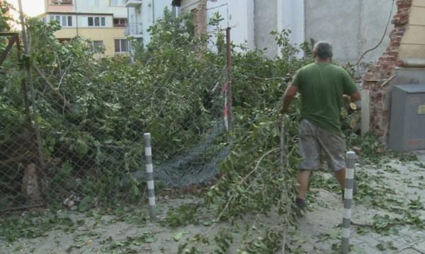 """Гняв в София: Защо пет стари дървета станаха """"на трупчета""""?"""