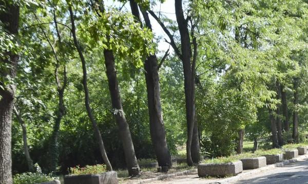 Маркират опасни и гнили дървета в Борисовата градина