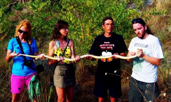 Рекорд край Бургас: Змия с дължина... 2 метра!