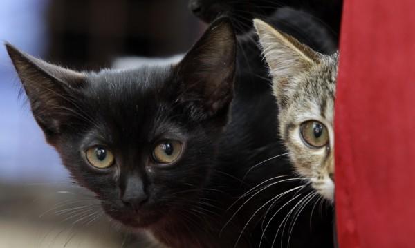 Милионерска вдовица завеща $300 000 на двете си... котки