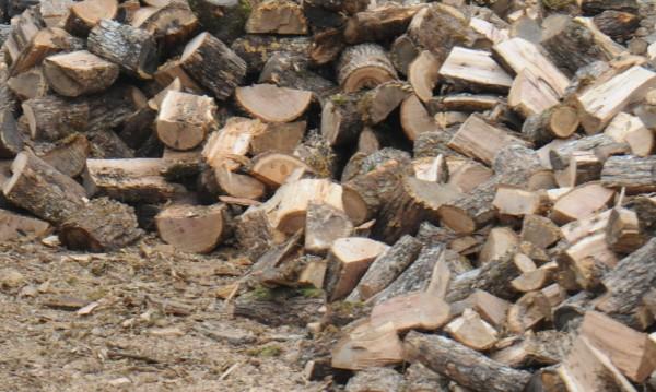 В Берковица: Местни товарят незаконни дърва в камиони