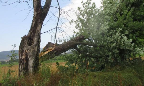 Кой носи отговорност за опасните дървета край пътя? Никой!