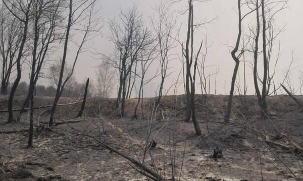 Пожарът над Кресненското дефиле – истинска екологична катастрофа