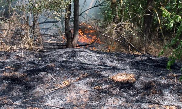 От изпитания във ВМЗ: Пожар избухна край Сопот