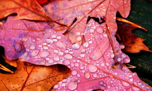 Времето днес: Есенно, облачно, ще превали!