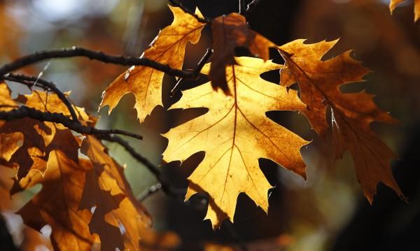 Тази есен като миналата – топла и суха!