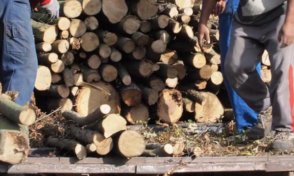 Промоция: Левче за кубик дърва, нападнати от корояд
