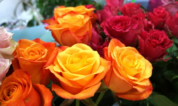 Българската роза – изместена от еквадорската!