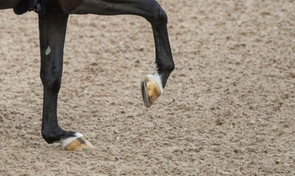 9-годишно с опасност за живота, ритнато е от кон