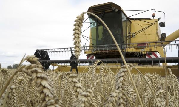 След Brexit: Земеделци на Острова обезпокоени за бъдещето