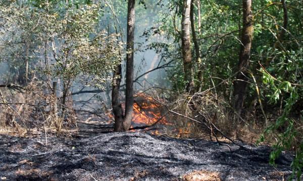 Овладяха пожар в труден терен в Пирин