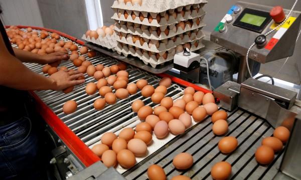 БАБХ успокоява: Фипронилът в яйцата е незначително малко!