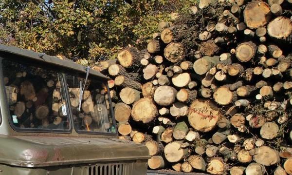 Млад мъж загина при добив на дърва, затисна го трактор