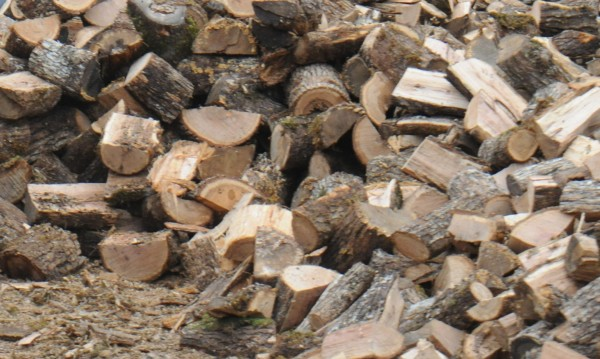 На прага на зимата: Криза с дървата в Кърджалийско