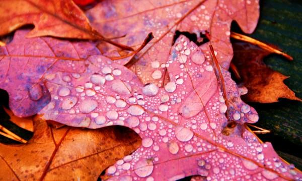 Времето днес: Есенно, хладно, на места ще превали