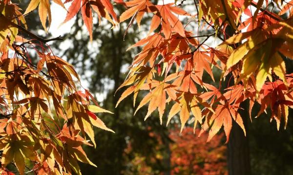 Есента започва официално: Точно в 23.02 днес