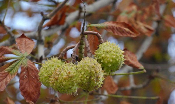 Лятото свърши, есента е вече тук