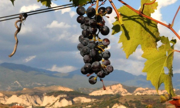 За домашна ракия и вино: Търси се грозде за... лични нужди