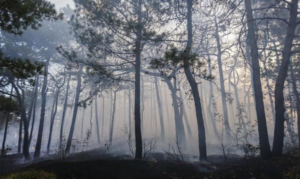 Пожар изпепели треви и борова гора в Монтанско