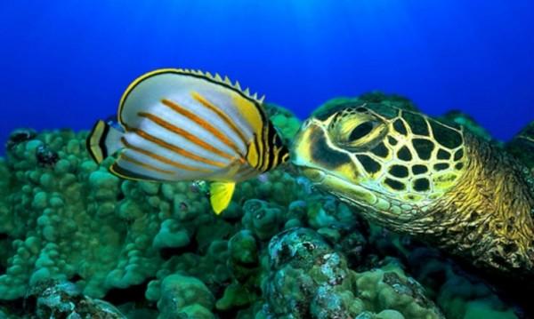 """Потапяне в """"Светът на океаните"""""""