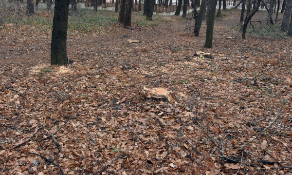 Спасиха двама ловци, изгубили се в гората в Шуменско