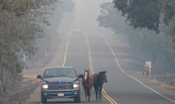 Пожарите в Калифорния отнеха живота на 21 души