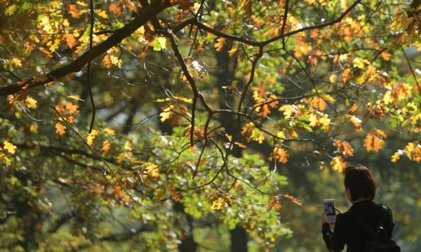 Златна есен: Сутринта с мъгла, следобед – до 26°