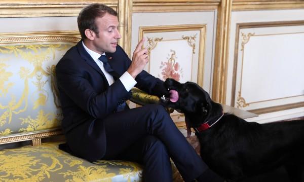 Кучето на Макрон с противообществена проява