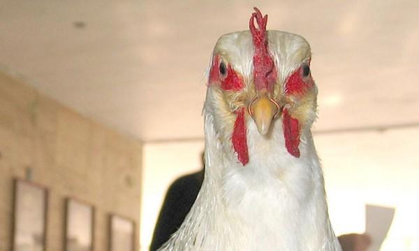 Откриха огнище на птичи грип в Хасковско