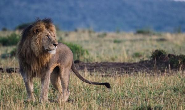 Какво трябва да знаем, ако обичаме човек от зодия Лъв?
