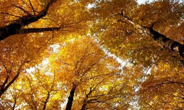 Обещано от синоптиците за днес: Слънчево и по-топло