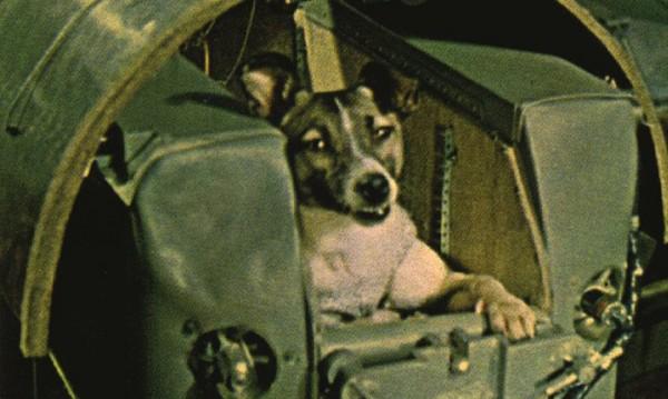 Защо бездомното куче Лайка първо полетя в Космоса?