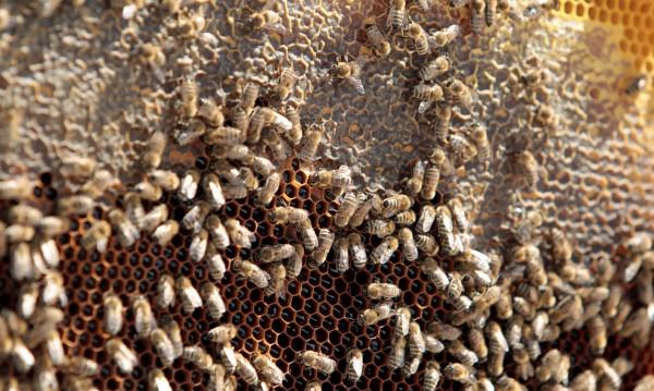 Еко катастрофа – хиляди пчели загинаха при пътен инцидент