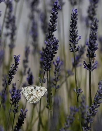 Растение в спалнята помага за по-качествен сън