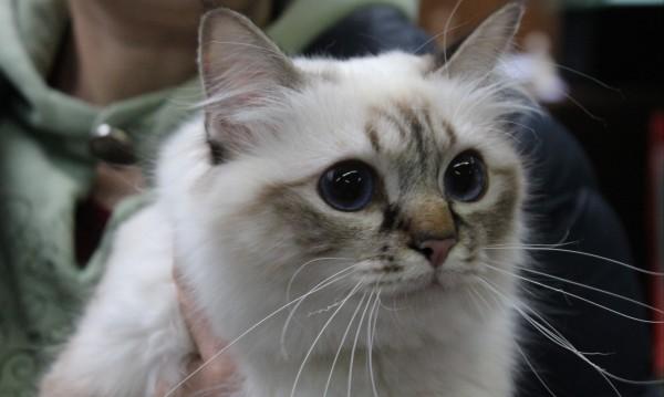 Котка-меломан смути съседите в германски град
