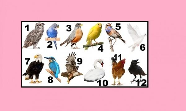 Изберете рождения ви месец и вижте коя е вашата птица