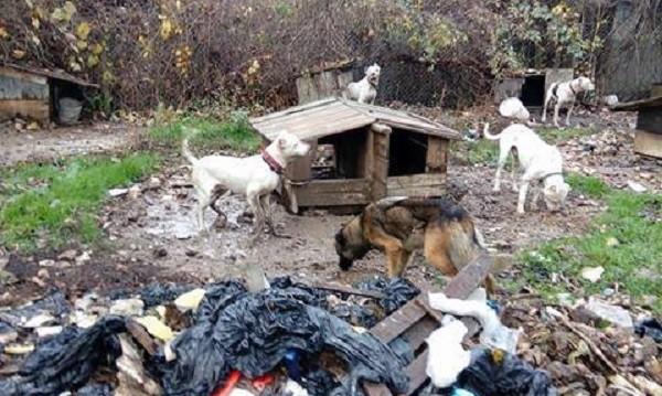"""""""Развъдник на ужасите"""" край Варна - 15 кучета, кожа и кости..."""
