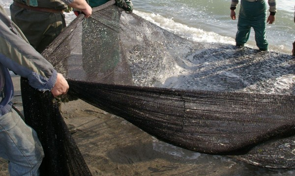 Преди Никулден спипаха над тон незаконен улов риба