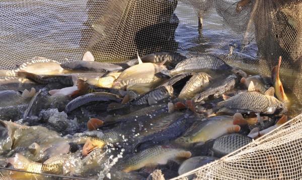 Наближава Никулден: Полицията улови бракониери