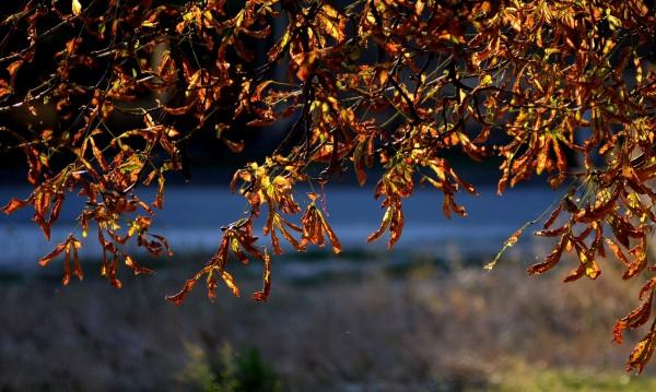 Пролет посред зима, температурите скачат до 15°С