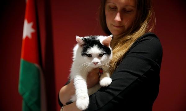 Котки на служба: Мишелови или лентяи?