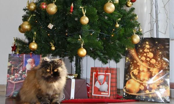 Българинът на Коледа масово у дома, за ЧНГ може и на ресторант