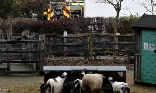 9 души са пострадали при пожара в лондонския зоопарк