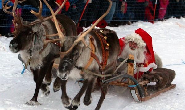 И нещо любопитно за помощниците на Дядо Коледа - елените