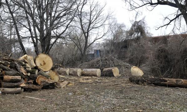За 2017 г.: Задържани са над 20 000 куб. м незаконна дървесина